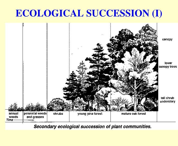 ECOLOGICAL SUCCESSION (I)