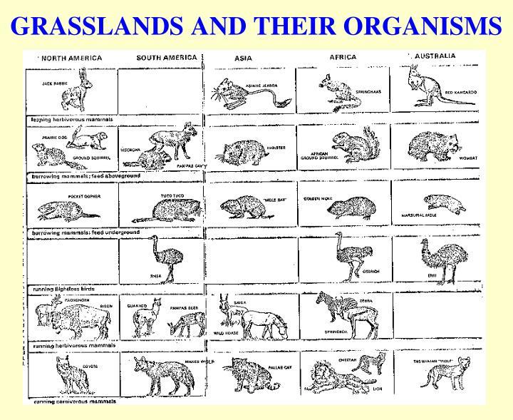 GRASSLANDS AND THEIR ORGANISMS