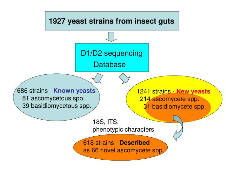 D1/D2 sequencing