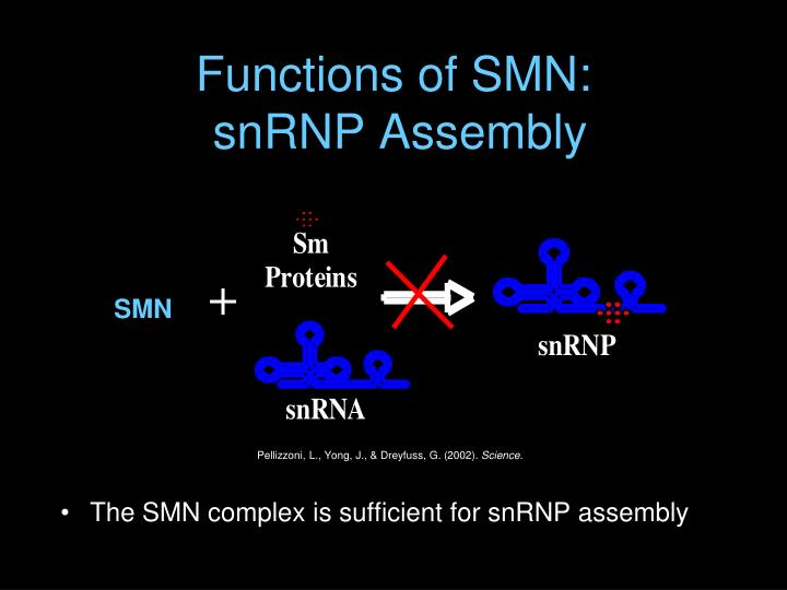 Functions of SMN: