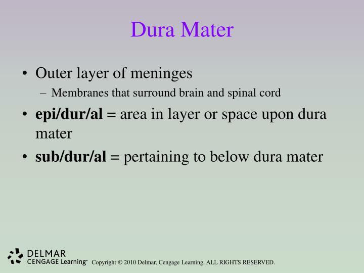 Dura Mater