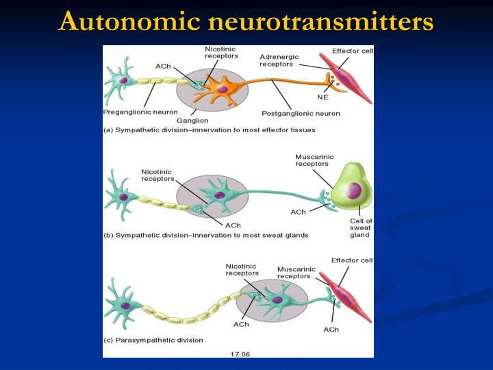 Autonomic neurotransmitters