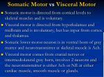somatic motor vs visceral motor