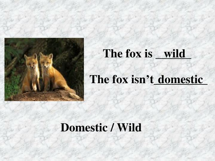 The fox is ______