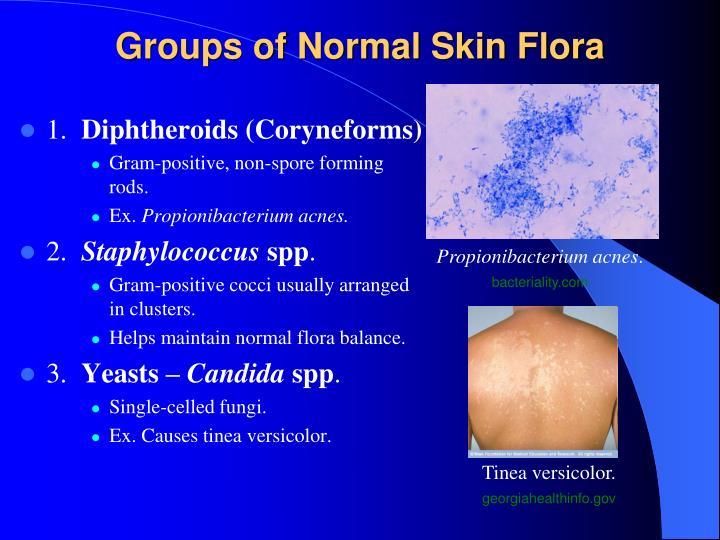 Groups of Normal Skin Flora