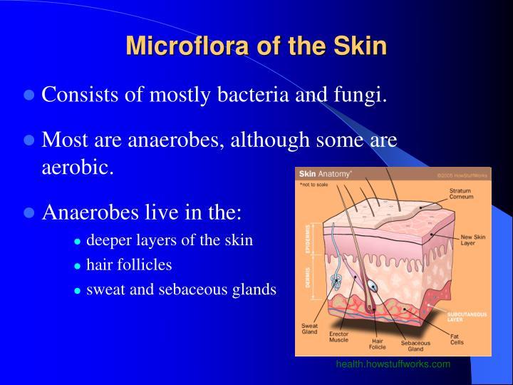 Microflora of the Skin
