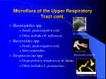 microflora of the upper respiratory tract cont