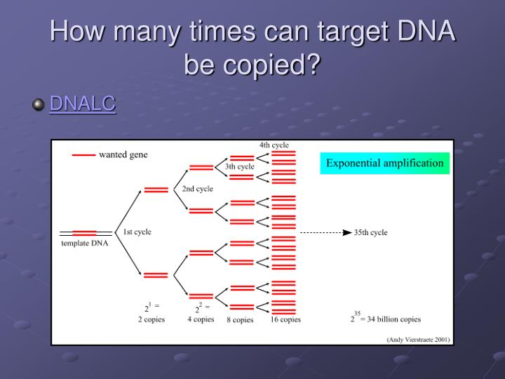 How many times can target DNA be copied?
