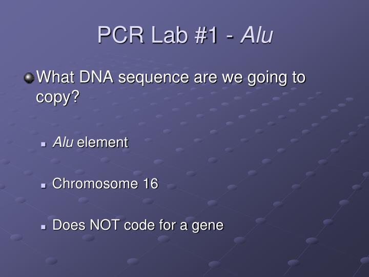 PCR Lab #1 -