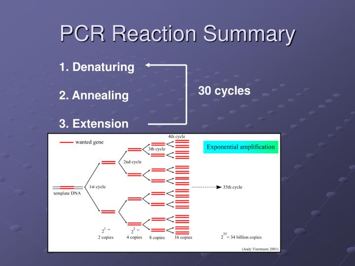 PCR Reaction Summary