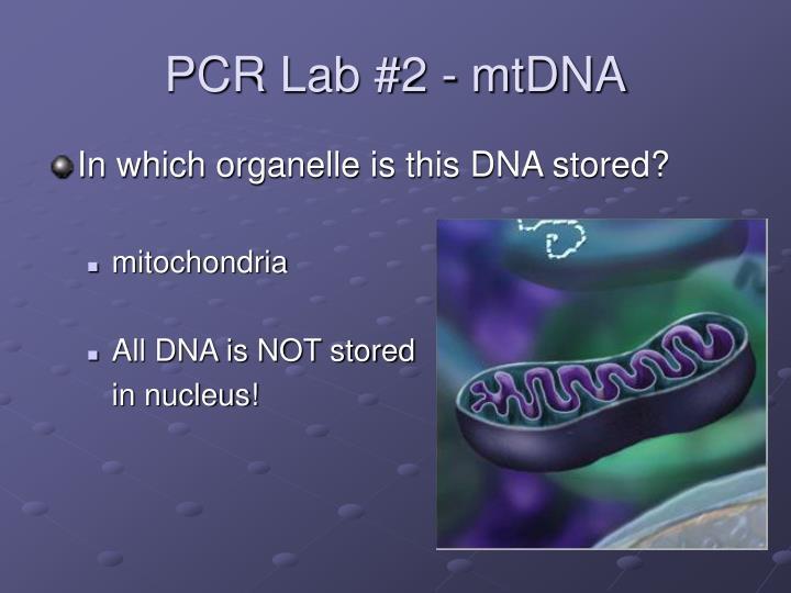 PCR Lab #2 - mtDNA