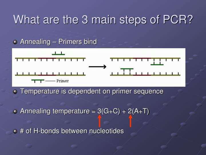 What are the 3 main steps of PCR?