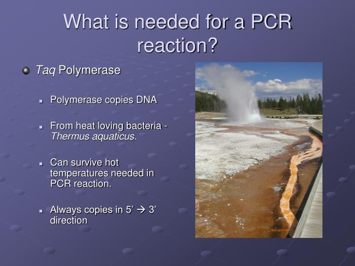 What is needed for a PCR reaction?