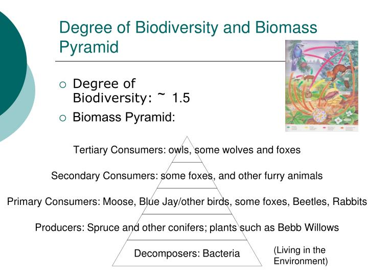 Degree of Biodiversity and Biomass Pyramid