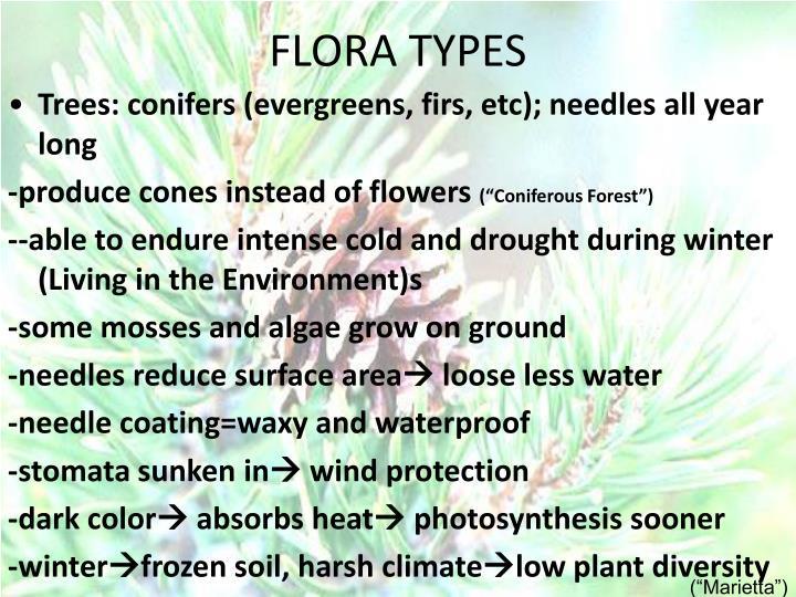 FLORA TYPES