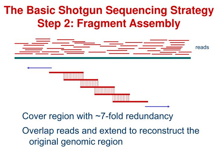 The Basic Shotgun Sequencing Strategy