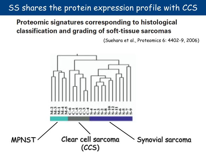 SS shares the protein expression profile with CCS