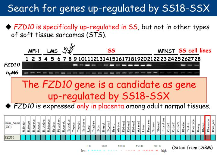 Search for genes up-regulated by SS18-SSX