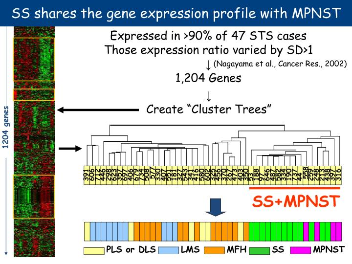SS shares the gene expression profile with MPNST