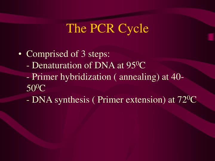 The PCR Cycle