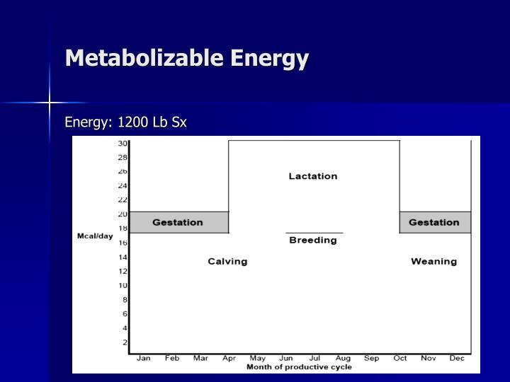 Metabolizable Energy