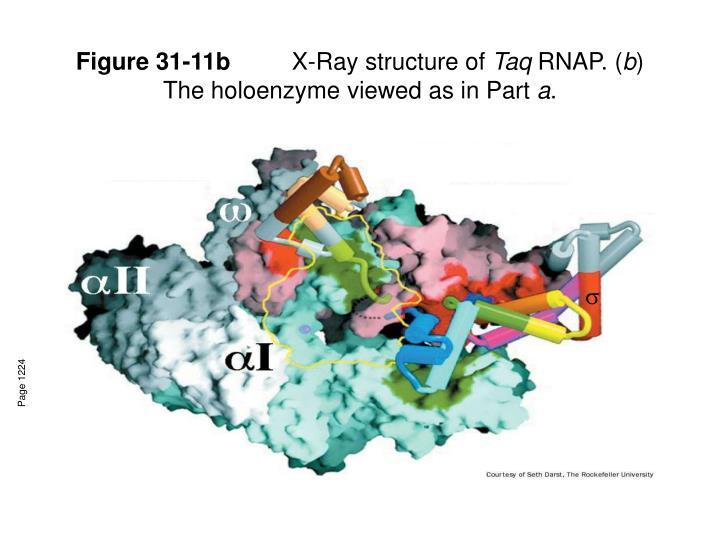 Figure 31-11b