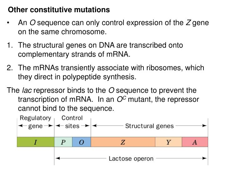 Other constitutive mutations