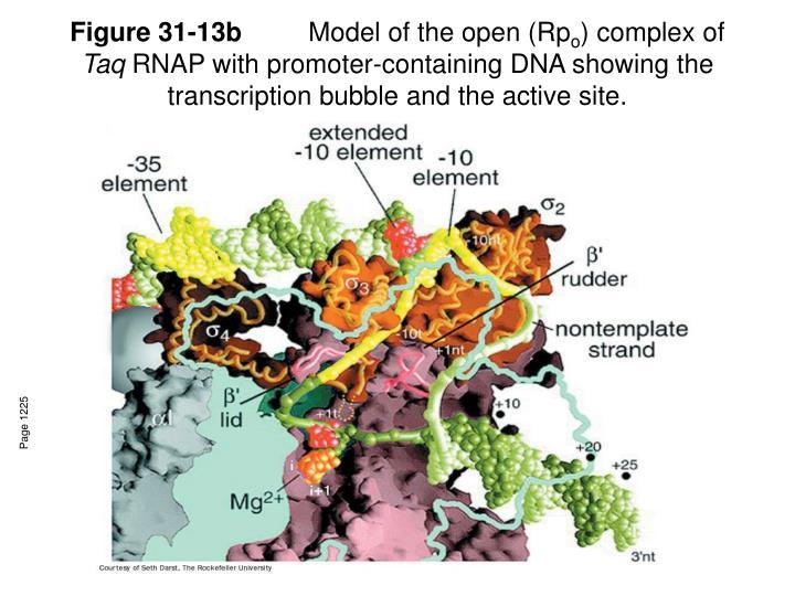 Figure 31-13b