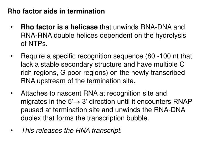 Rho factor aids in termination