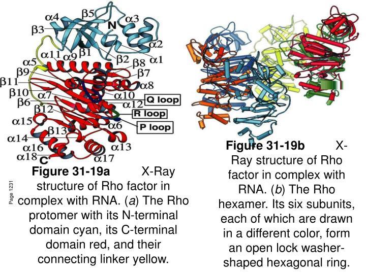 Figure 31-19a