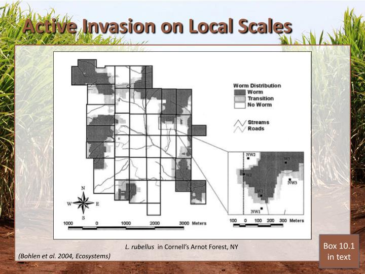 Active Invasion on Local Scales