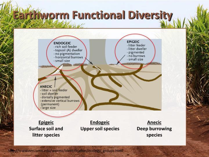 Earthworm Functional Diversity