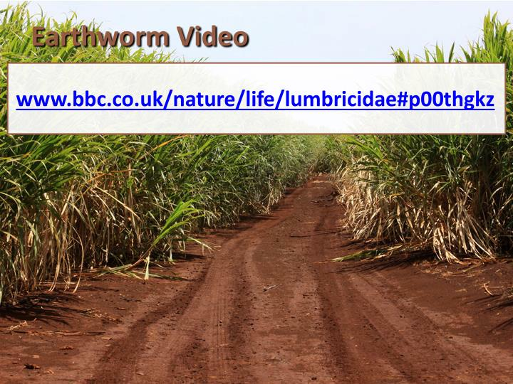 Earthworm Video