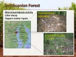 smithsonian forest