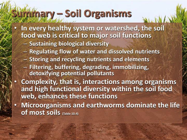 Summary – Soil Organisms