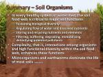 summary soil organisms