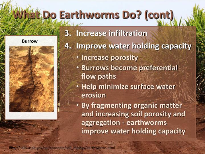 What Do Earthworms Do? (cont)