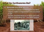what do earthworms do