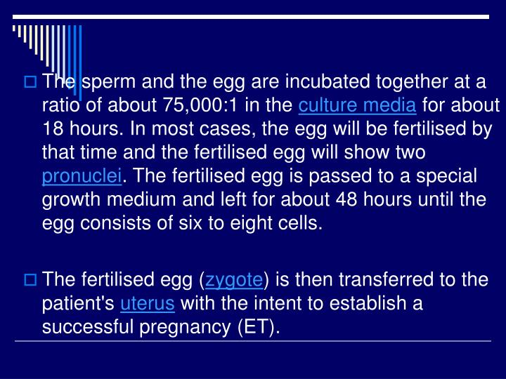 The sperm and the egg are incubated together at a ratio of about 75,000:1 in the
