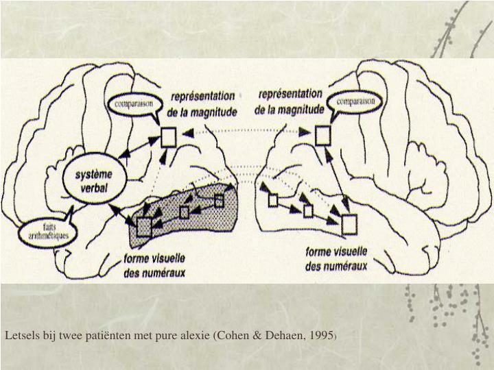 Letsels bij twee patiënten met pure alexie (Cohen & Dehaen, 1995