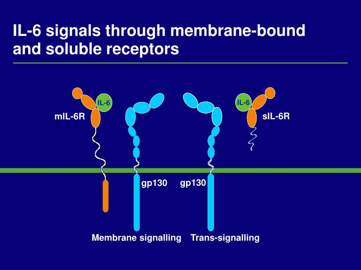 Il 6 signals through membrane bound and soluble receptors