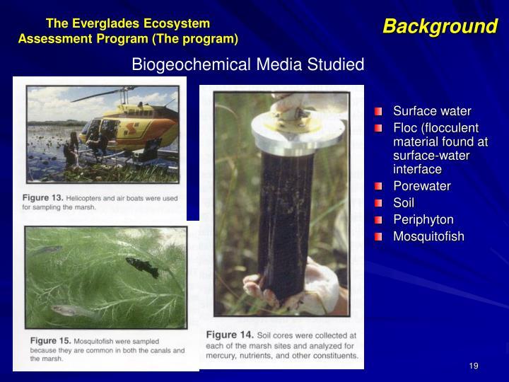 The Everglades Ecosystem