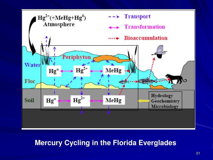 Mercury Cycling in the Florida Everglades