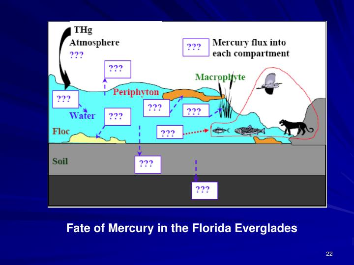 Fate of Mercury in the Florida Everglades