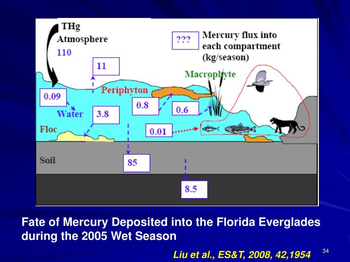 Fate of Mercury Deposited into the Florida Everglades during the 2005 Wet Season