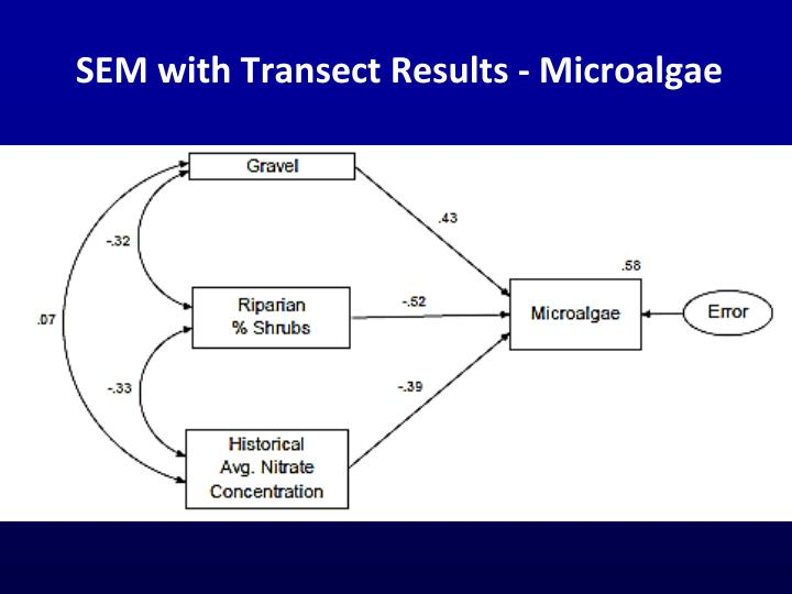 SEM with Transect