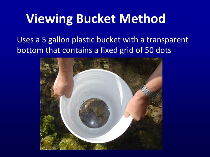Viewing Bucket