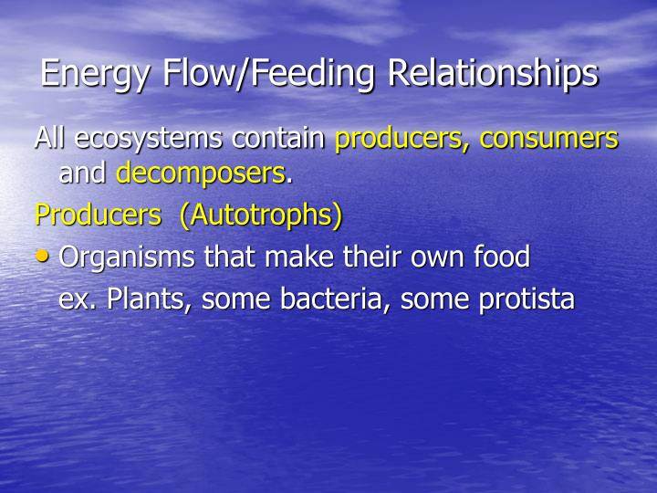 Energy Flow/Feeding Relationships
