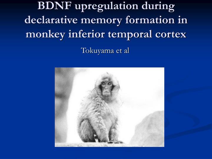 BDNF upregulation during declarative memory formation in monkey inferior temporal cortex