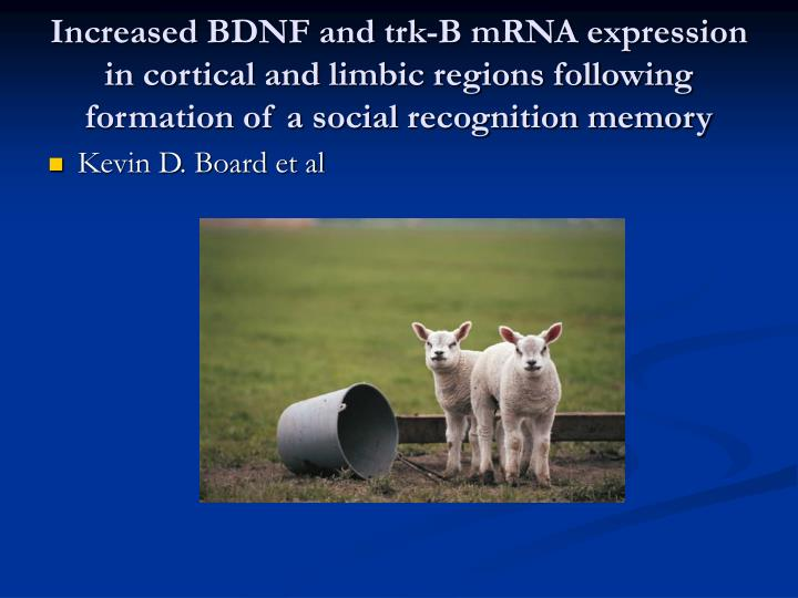 Increased BDNF and trk-B mRNA expression in cortical and limbic regions following formation of a social recognition memory